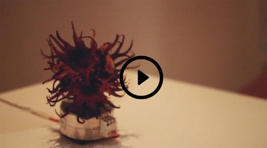 Grados de movimiento Captura video